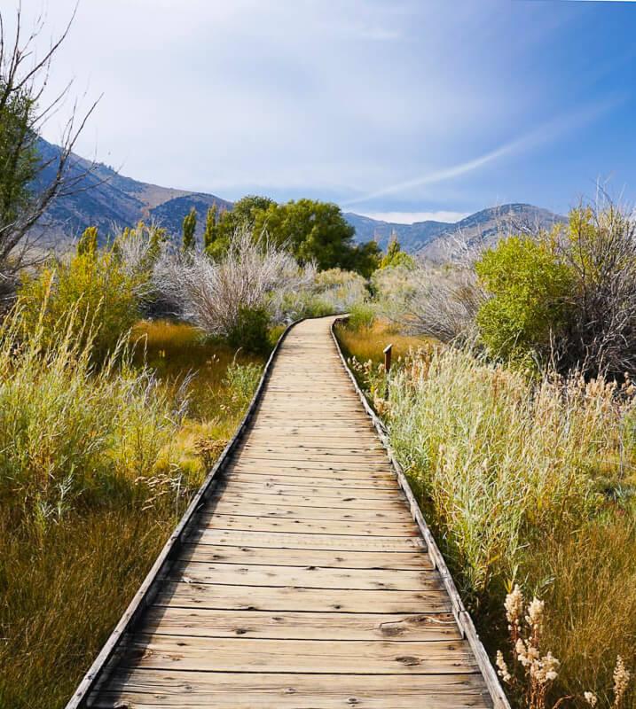 Boardwalk Trail Mono Lake California USA