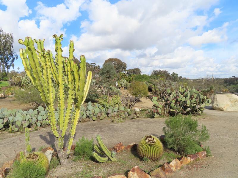 Desert Garden Balboa Park San Diego California USA