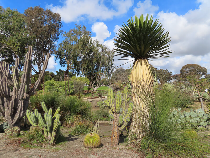 Desert Garden at Balboa Park in San Diego California USA