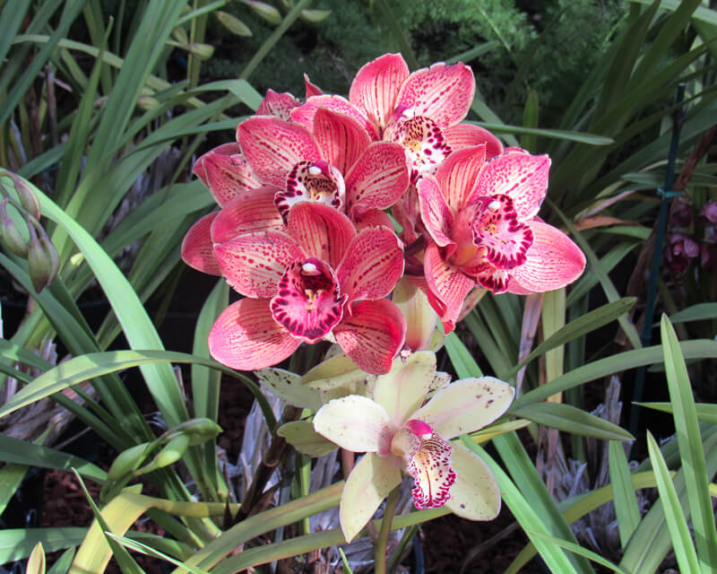 Orchids Botanical Building Balboa Park San Diego California USA