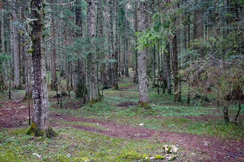 Pine Forest Black Lake Montenegro
