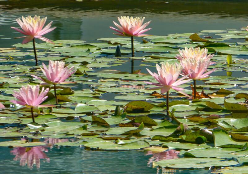 The Botanical Garden in Padua Italy