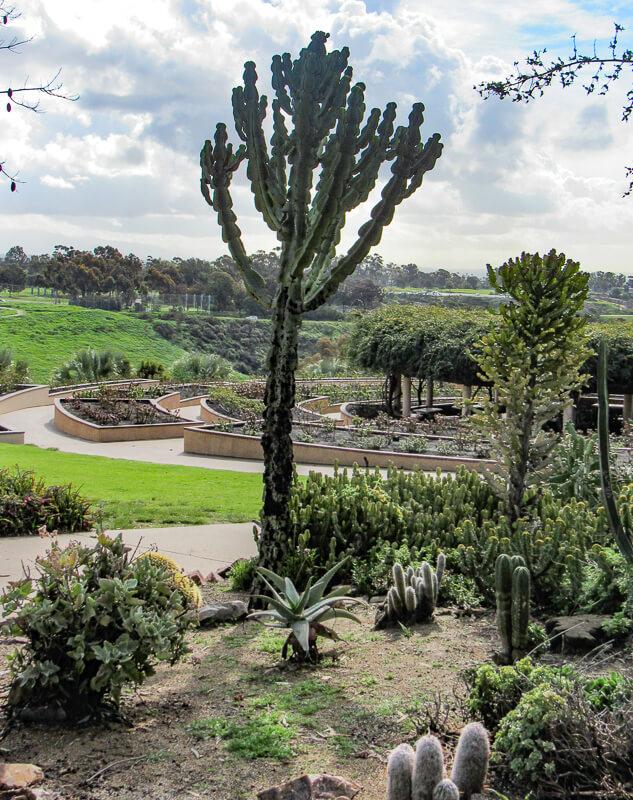View of Rose Garden from Desert Garden at Balboa Park in san Diego, California