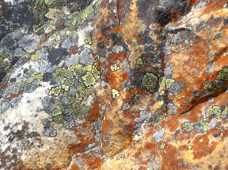 Moss and lichen Mount Edith Cavell Jasper Canada