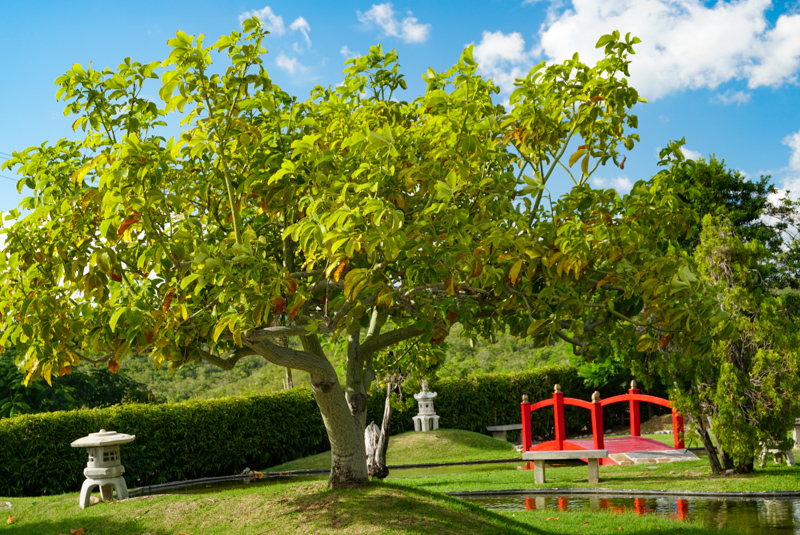 The Japanese Garden in Ponce PR