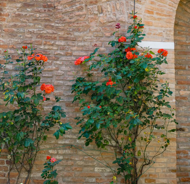 Courtyard of the Mueum of the Risorgimento in Ferrara Italy