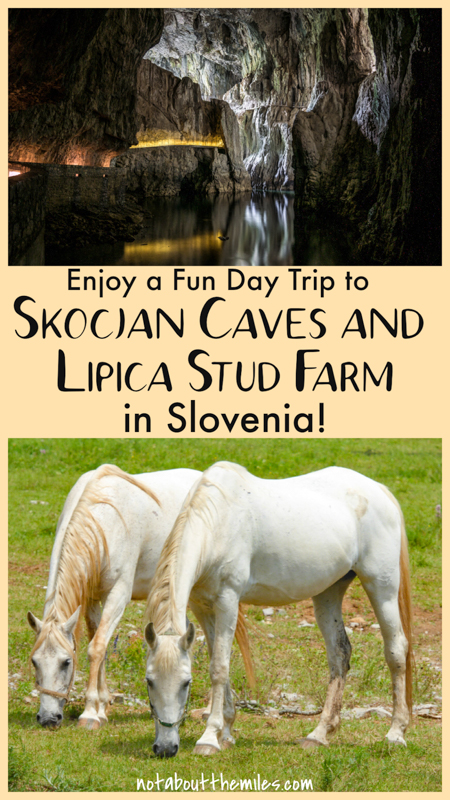 Discover how to do the perfect day trip to the Skocjan Caves and Lipica Stud Farm in the Slovenian Karst from Ljubljana or the Slovenian coast! Marvel at the vast underground caverns at Skocjan and admire the famous Lipizzan horses at Lipica!
