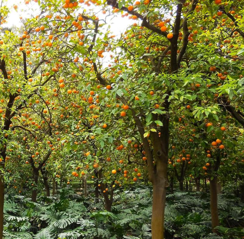 Orangerie Seville Alcazar Gardens Seville Spain