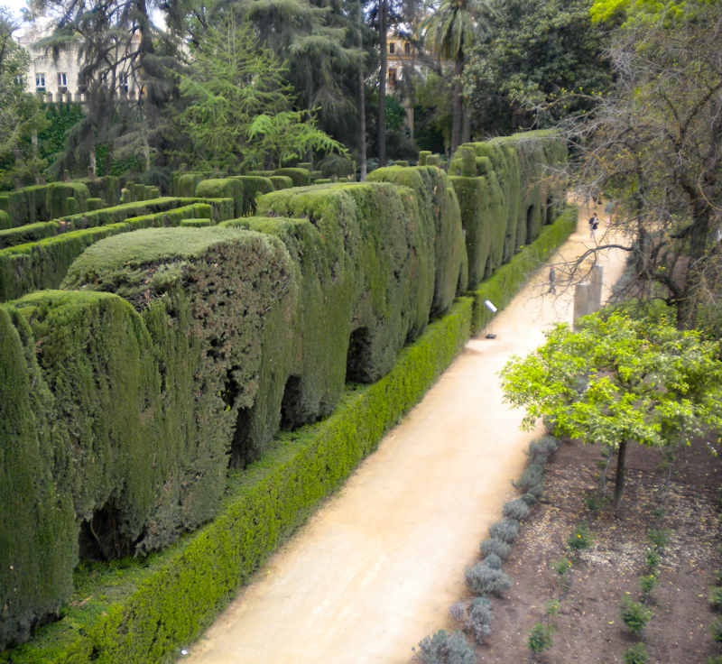 Topiary in the Seville Alcazar gardens