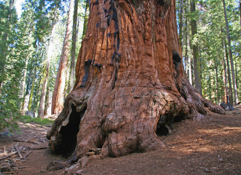Sequoia and Kings Canyon National Parks California