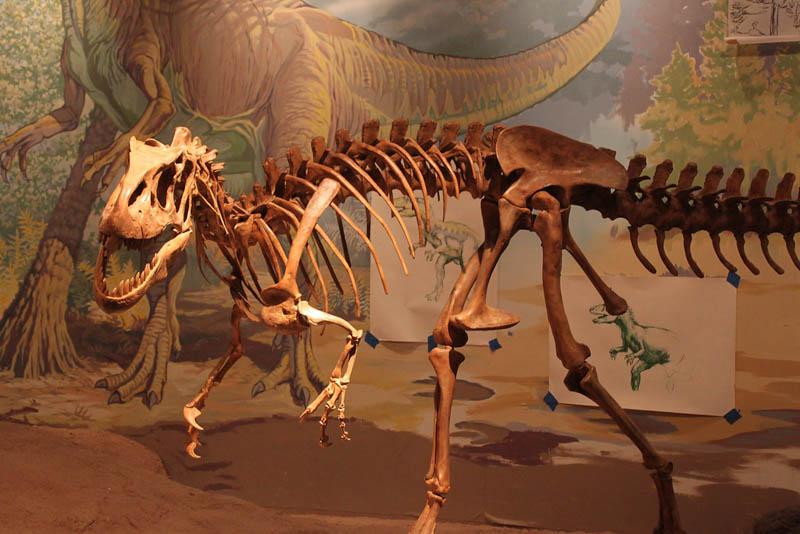 Dinosaur Skeleton in Vernal, Utah