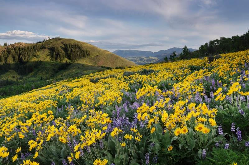 Wildflowers in Methow Valley Washington