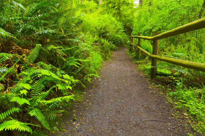 Hiking Trail in Deception Pass SP Washington, one of the best places to visit in the Pacific Northwest!