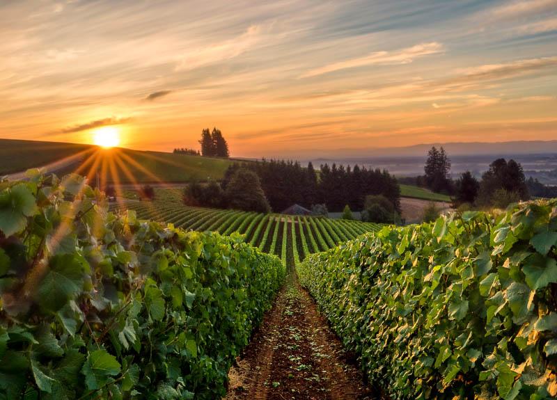 Sunrise at Willamette Valley in Oregon