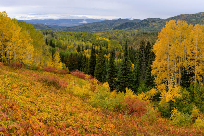 Fall colors in Routt National Forest Steamboat Springs CO