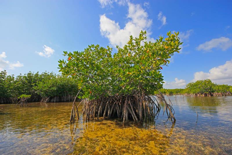 Biscayne National Park in Florida