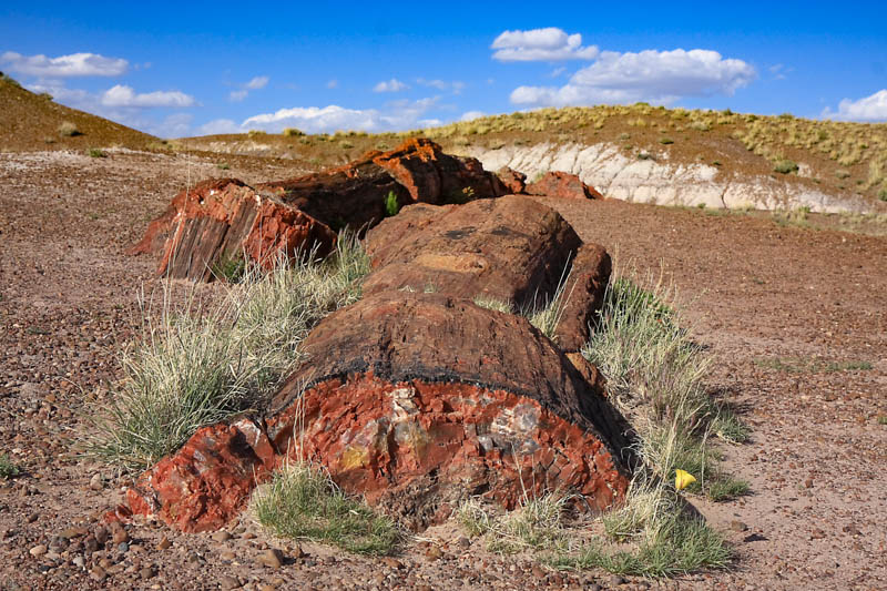 Petrified log at Petrified Forest National Park in Arizona