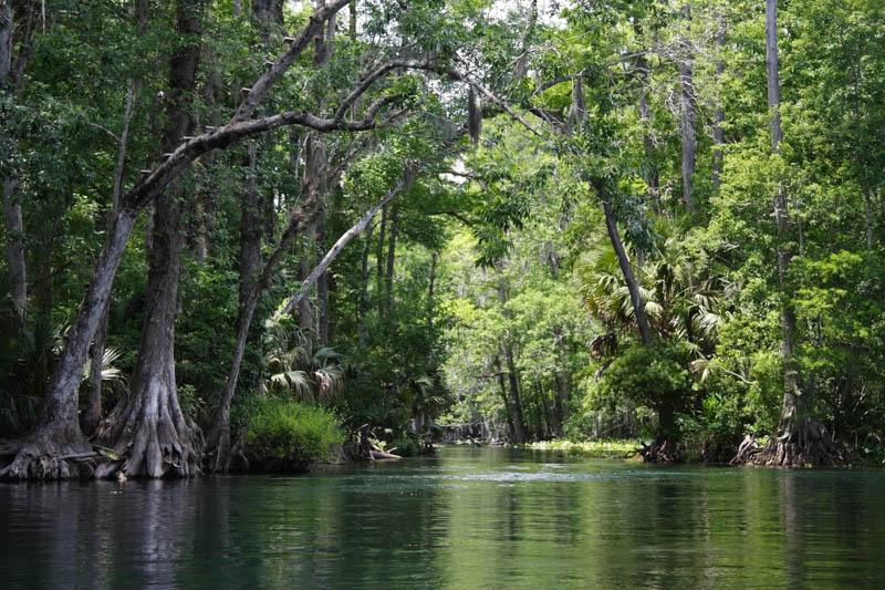 Silver River, east of Ocala FL