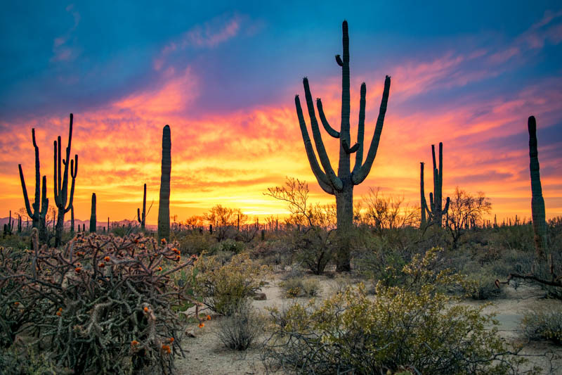Sunset at Saguaro National Park in Arizona